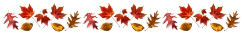 thanksgiving-fall-leaves-divider